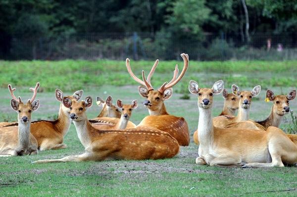 Cerfs Groupe