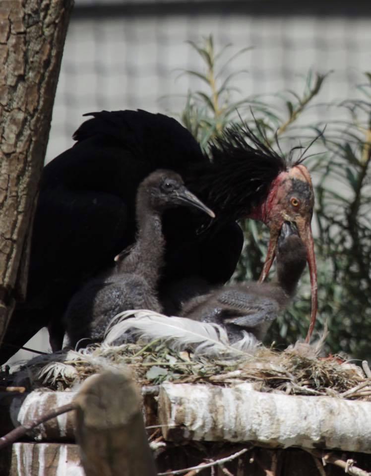 12 un petit au nid 23 mai 2017 muriel de peyrolle