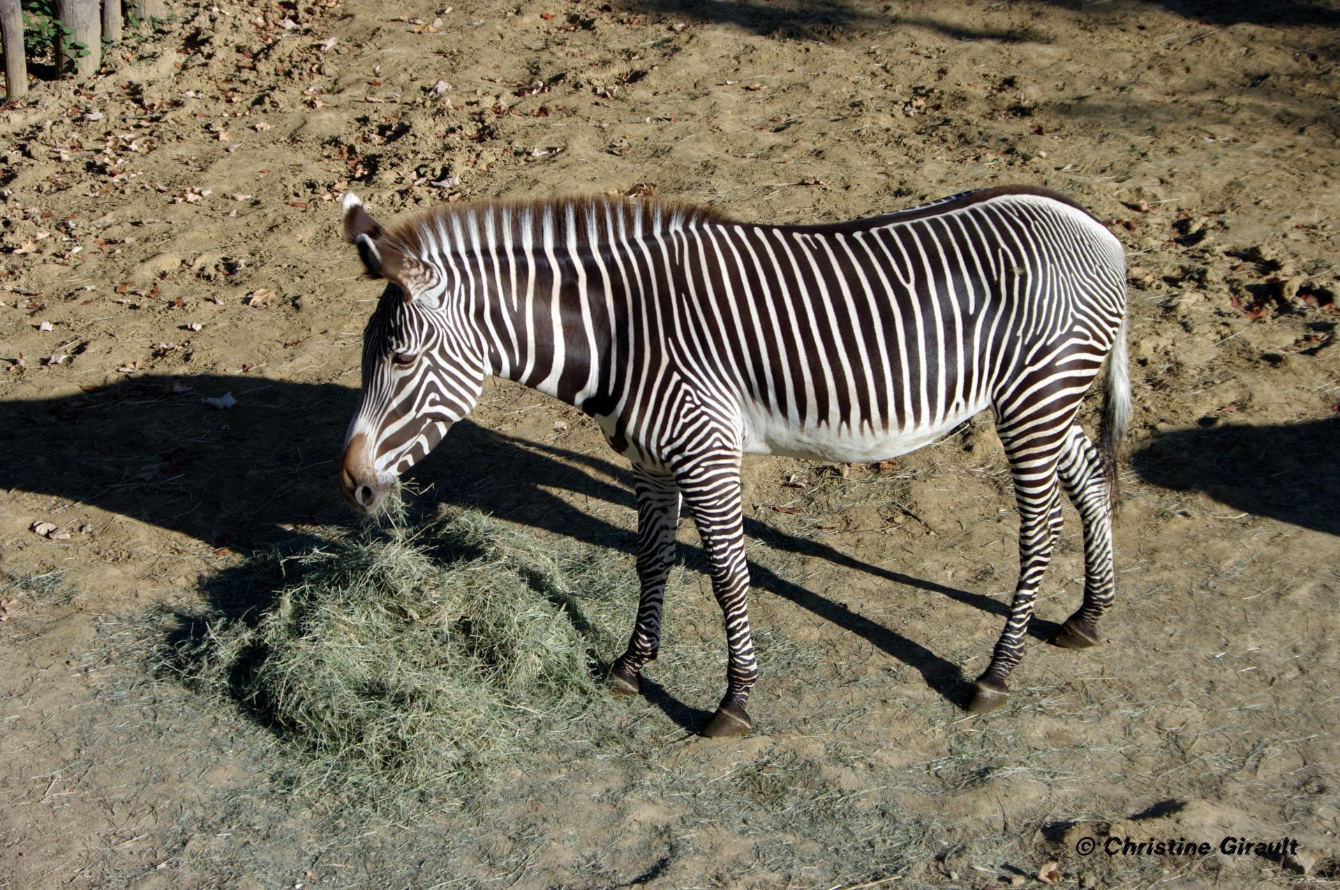 20 zone sahel soudan petit dejeuner de zebre