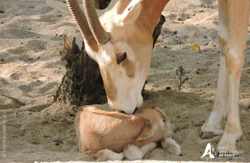 27 instinct maternel