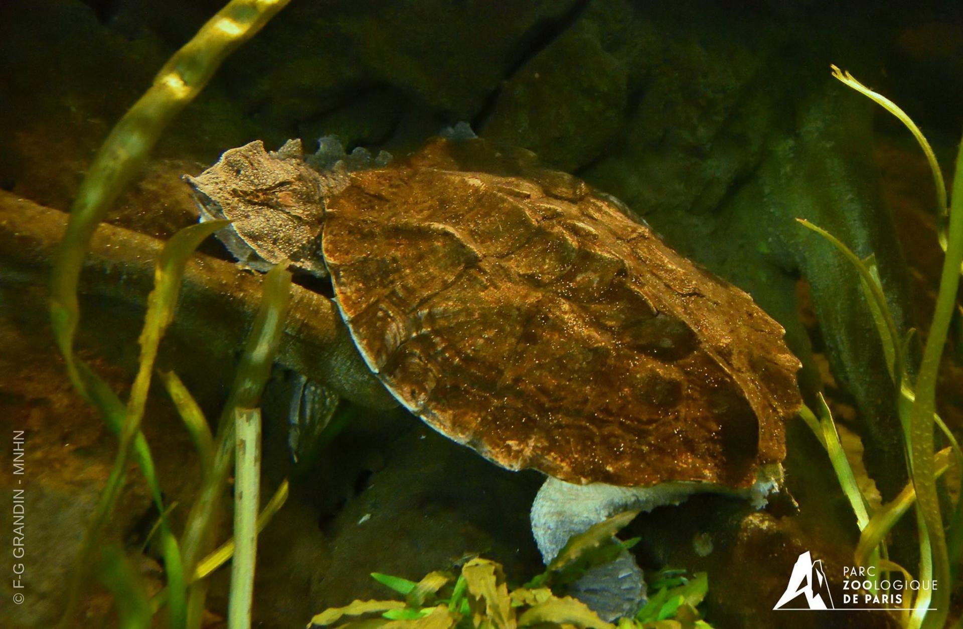 5 tortue matata