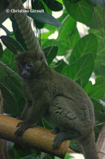 68 zone madagascar serre tropicale azufel
