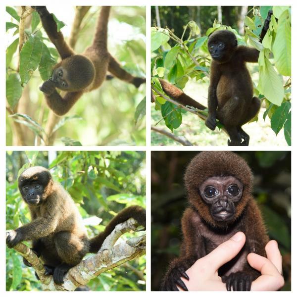 Bebes singes laineux collage