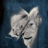 T-shirt Lions