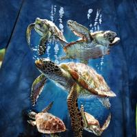 T-shirt Tortues Marines