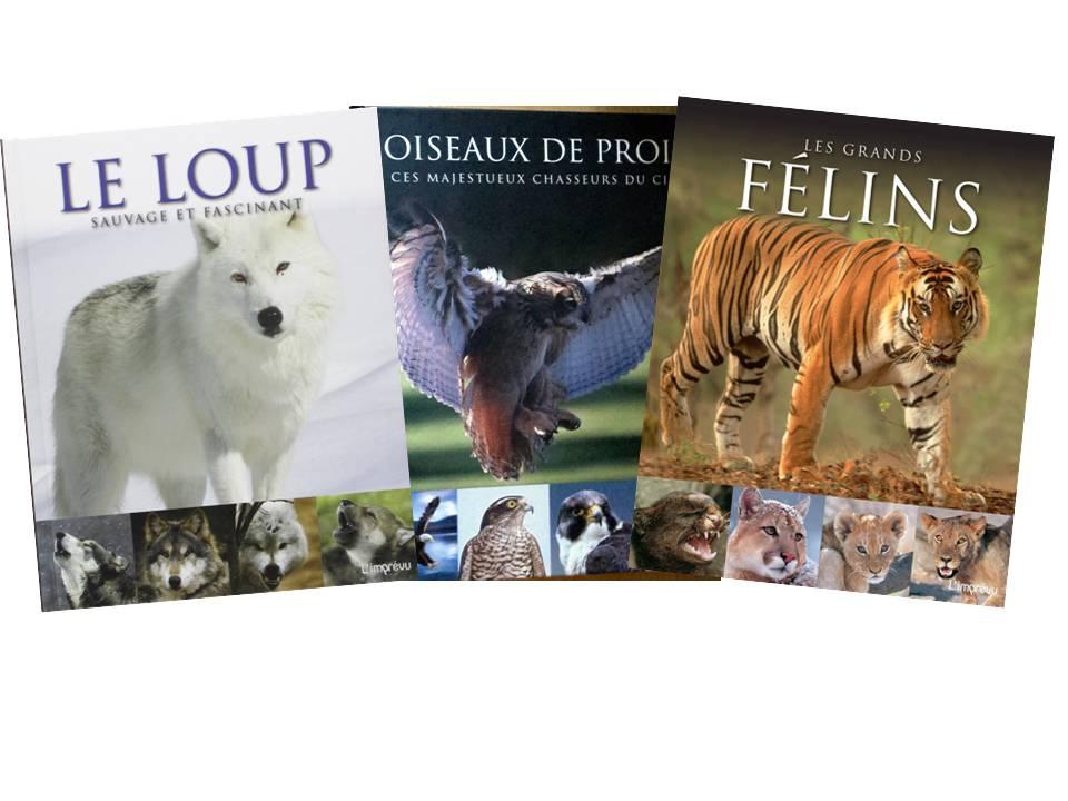 Eventail beaux livres