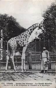 Girafe offerte