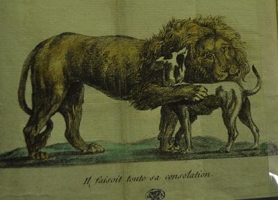 Lion woira chien