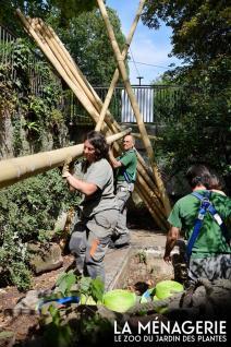 Renovation de l enclos des pandas
