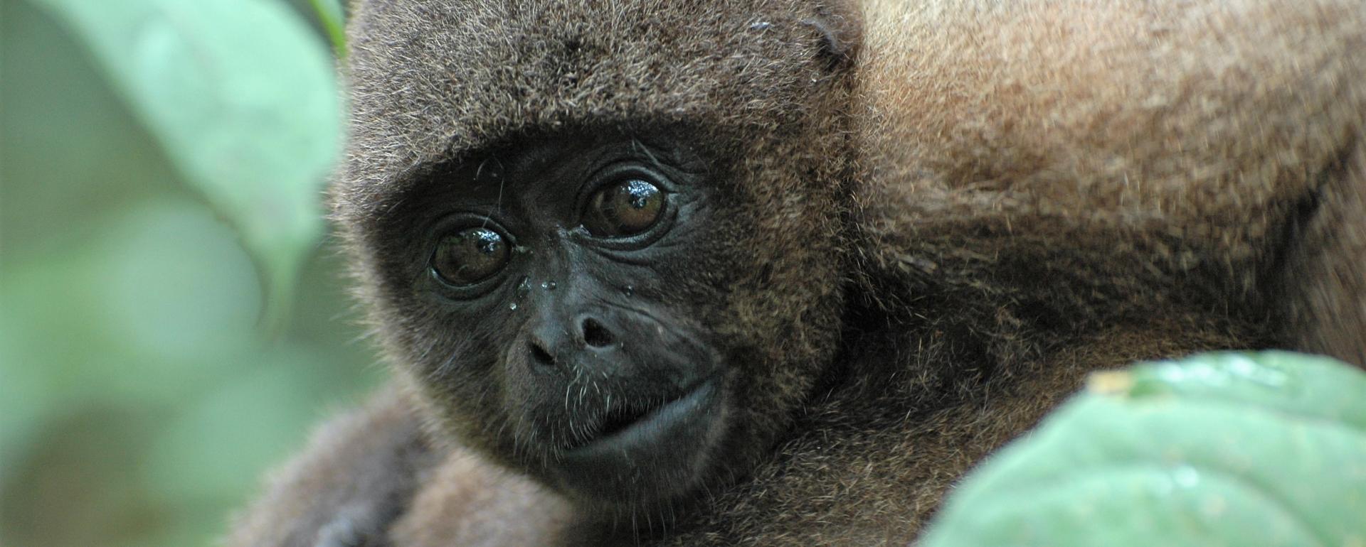 Société d'Encouragement pour la Conservation des Animaux Sauvages