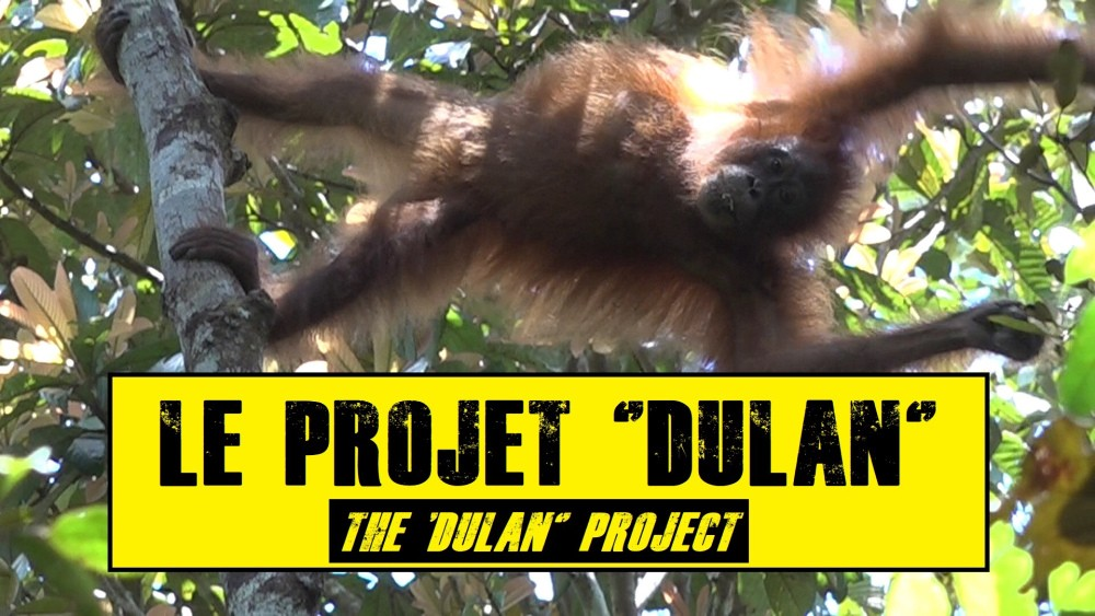 The dulan project 2