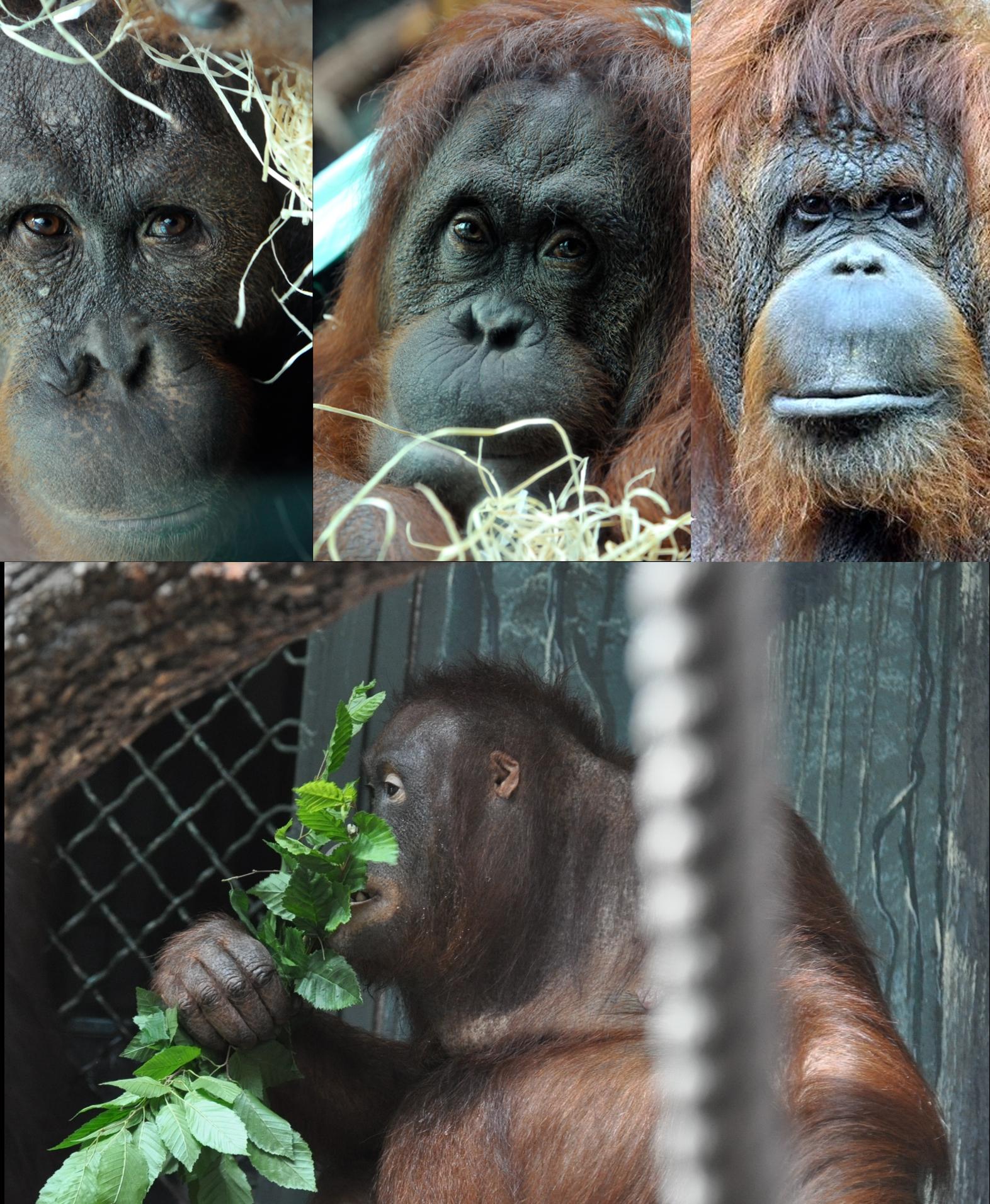 Famille orang soutans