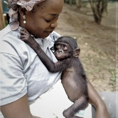 Parrainage Bonobo
